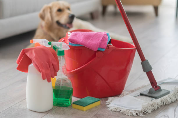 Happy dog sitting behind various cleaning products at home.