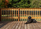 Happy dog sunbathing on warm deck in the Autumn. Carefree and happy domestic animal pet.