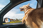 istock Happy dog travel by car 1190162960