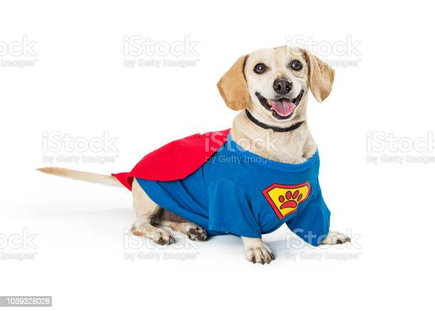 Happy dog wearing super hero costume picture id1059326026?b=1&k=6&m=1059326026&s=612x612&h=tprjljpefyjeskzfwbgvyrywhgznno5kexjizhlugdu=