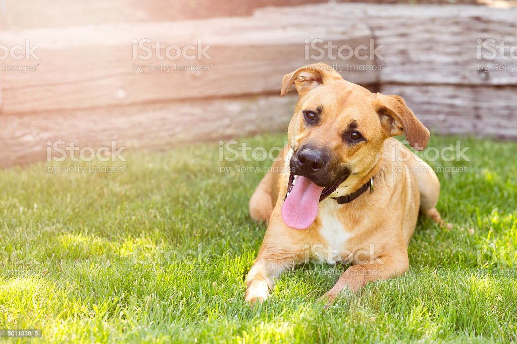 Happy Dog with a Friendly Smile stock photo