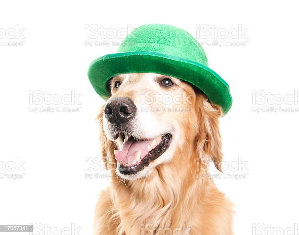Happy dog with a green hat picture id173573411?b=1&k=6&m=173573411&s=612x612&h=ukv65fhpn28enw iolcc 0k5mg90gnje9cqj50pqu8m=