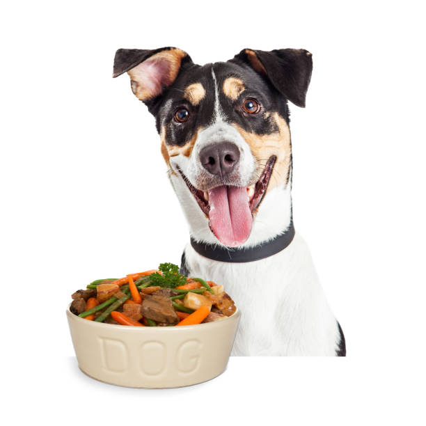 Happy Dog With Bowl of Homemade Food Happy smiling dog with bowl of homemade dog food including beef, carrots, potatoes and green beans green beans with dog stock pictures, royalty-free photos & images