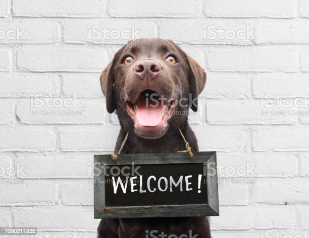 Happy dog with chalkboard with welcome text says hello welcome were picture id1090311338?b=1&k=6&m=1090311338&s=612x612&h=qh bosmnrhqecyhl1j9oxnvtyzp3tmptd0qdjjua4ws=