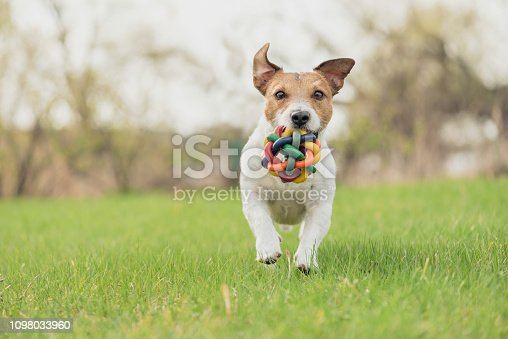 Portrait of Jack Russell Terrier in pastel colors at nice spring day