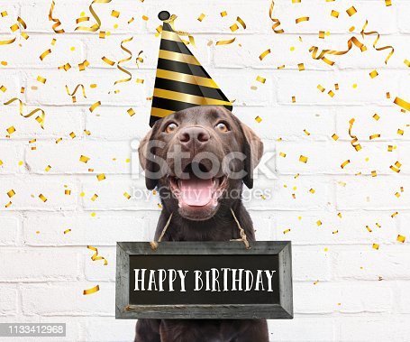istock Happy dog with party hat says happy birthday text on sign board around his neck with congratulations quote with confetti 1133412968