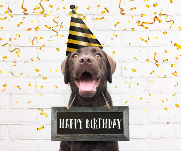 Happy dog with party hat says happy birthday text on sign board around his neck with congratulations quote with confetti stock photo