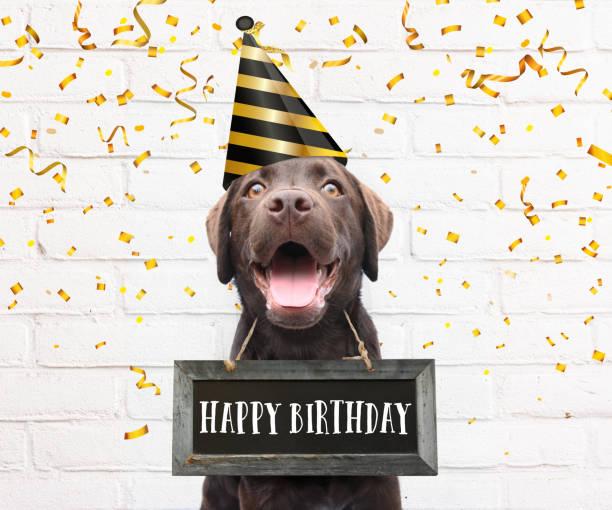 glücklicher hund mit partyhut sagt fröhlichen geburtstagstext auf schilderbrett um den hals mit glückwünschen zitat mit konfetti - kusszitate stock-fotos und bilder