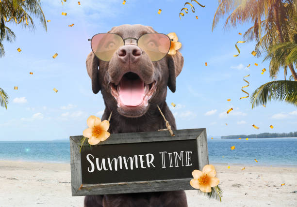 Happy dog with sunglasses enjoy his summer holiday on the beach text quote summer time stock photo