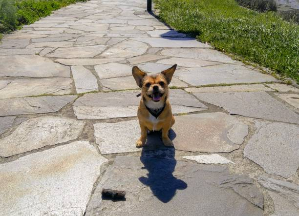Happy dogs face on a spring sunny day picture id1149082031?b=1&k=6&m=1149082031&s=612x612&w=0&h=tvw4hbqdswpwadmg v1funfnkn9mw0i rphc1aduoou=