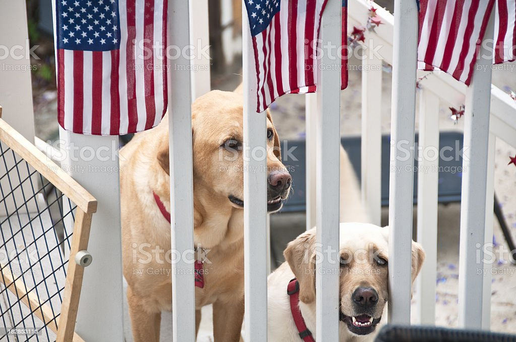 Happy Dogs royalty-free stock photo