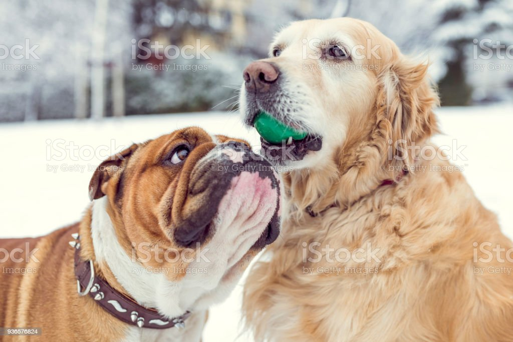 Happy Dogs Playing Stock Photo Download Image Now Istock
