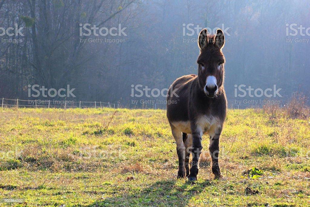 Happy Donkey stock photo