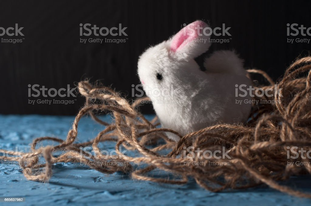 Happy Easter. baby rabbit white bunny on a blue color stock photo