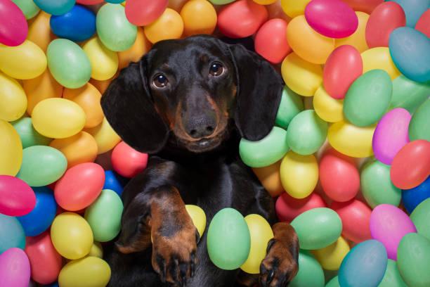 glücklicher Osterhund mit Eiern – Foto