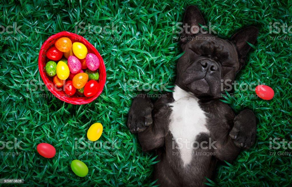 Happy Easter-Hund mit Eiern – Foto
