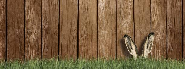 Happy Easter - Easter bunny in green grass in front of wooden wall Happy Easter - Easter bunny in green grass in front of wooden wall osterhase stock pictures, royalty-free photos & images