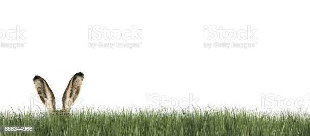 Happy easter easter bunny in green grass picture id668344966?b=1&k=6&m=668344966&s=612x612&h= zngmfbfkonhhlxev1j8eot3agd5ajlmj98f6evyu20=