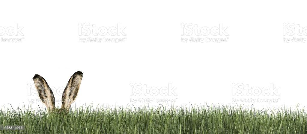 Frohe Ostern - Osterhase in Grasgrün – Foto