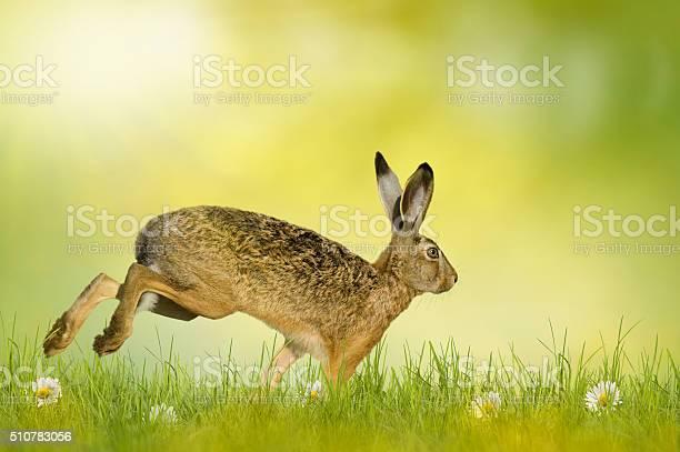 Happy easter easter bunny picture id510783056?b=1&k=6&m=510783056&s=612x612&h=v5cpaj0saizxb7vvcyefxfqm8wf96l6f3jl8flguwg8=