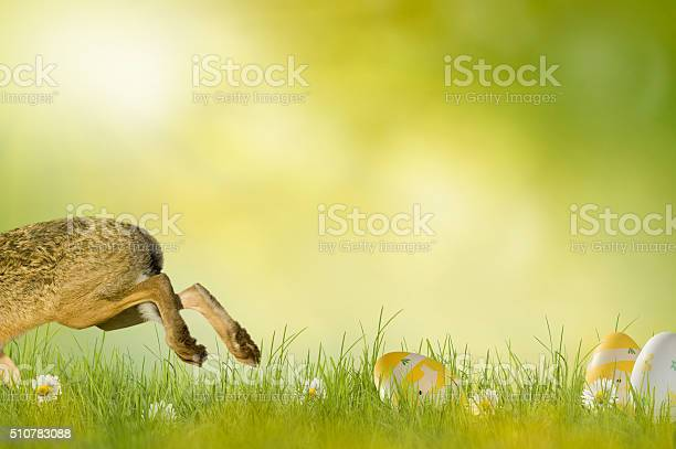 Happy easter easter bunny picture id510783088?b=1&k=6&m=510783088&s=612x612&h=6aghseryrco5siu9uflr7owg1tvogm9wgjsblveaslm=