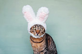 Happy Easter. European Shorthair young cat wearing funny bunny ears against pastel green background, closeup. Mackerel tabby kitty dressed as rabbit, close up. Space for text.