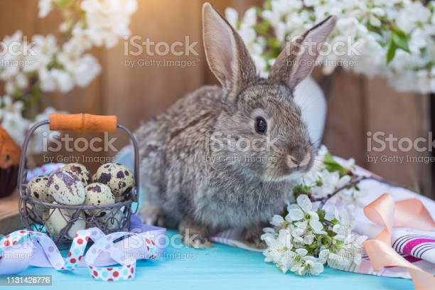 Happy easter little rabbit with a basket of eggs and cupcakes on the picture id1131426776?b=1&k=6&m=1131426776&s=612x612&h=ojktrhnuastofyn6awdkaepvyibza15fvhbe3j8u5ik=