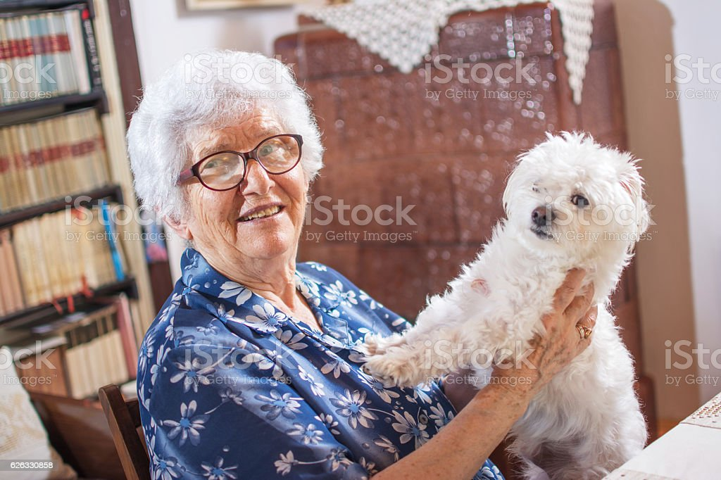 Happy elderly woman holding small Maltese dog. stock photo