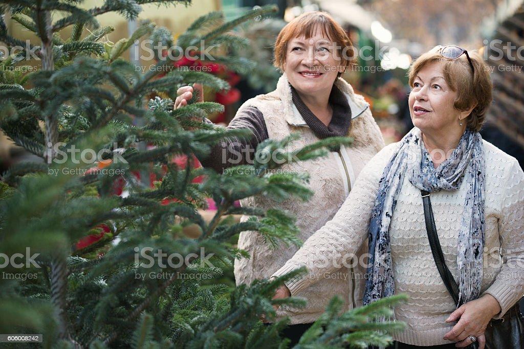 Happy elderly women selecting spruce stock photo