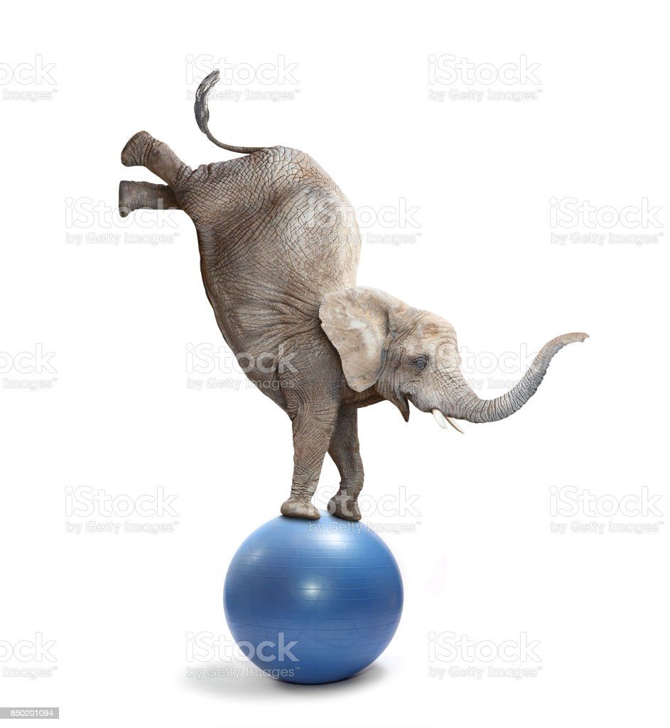 Happy elephant elephant balancing on a ball. stock photo
