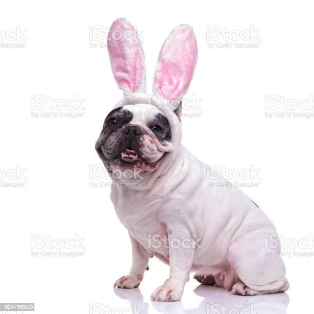 Happy ester bunny french bulldog sitting picture id924798550?b=1&k=6&m=924798550&s=612x612&h=gfvozxlqyhybw zpgwdlnevcg7tqptgmovekglvsqvg=