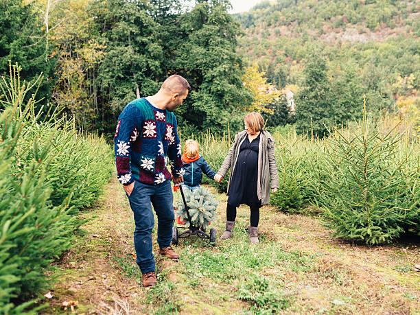 glückliche familie ein weihnachtsbaum zu hause bieten - 4 monat schwanger stock-fotos und bilder