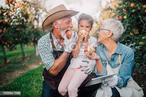 1063236916 istock photo Happy family eating apples 1055947336