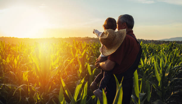옥수수 밭에서 행복한 가족. 옥수수 밭에 서있는 가족은 태양 상승을 보고 - 농업 뉴스 사진 이미지