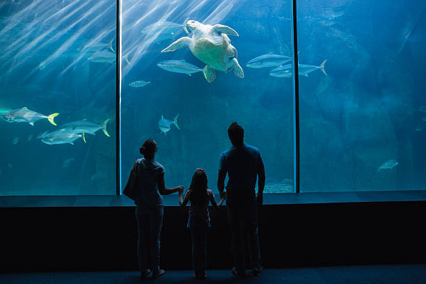Happy family looking at fish tank Happy family looking at fish tank at the aquarium aquarium stock pictures, royalty-free photos & images