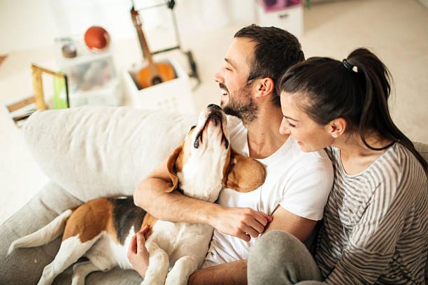 happy familia - mascota fotografías e imágenes de stock