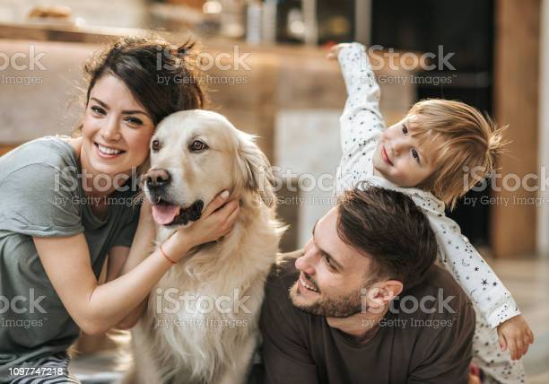 Happy family relaxing with their dog at home picture id1097747218?b=1&k=6&m=1097747218&s=612x612&h=aspoltorb6zjxltnxlcdza az ljn7gmnxuh3ghzroq=