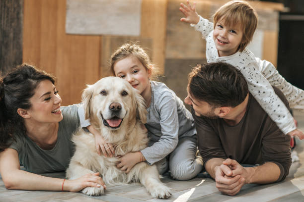 happy family relaxing with their retriever at home. - happy dog imagens e fotografias de stock