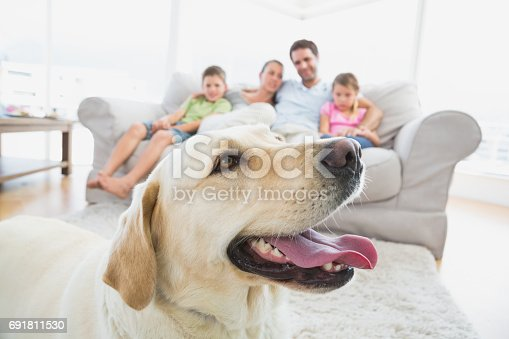 istock Happy family sitting on couch with their pet yellow labrador in foreground 691811530