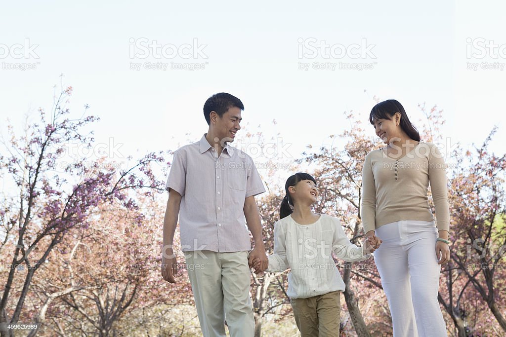 Happy family holding hands and taking a walk amongst the cherry trees...