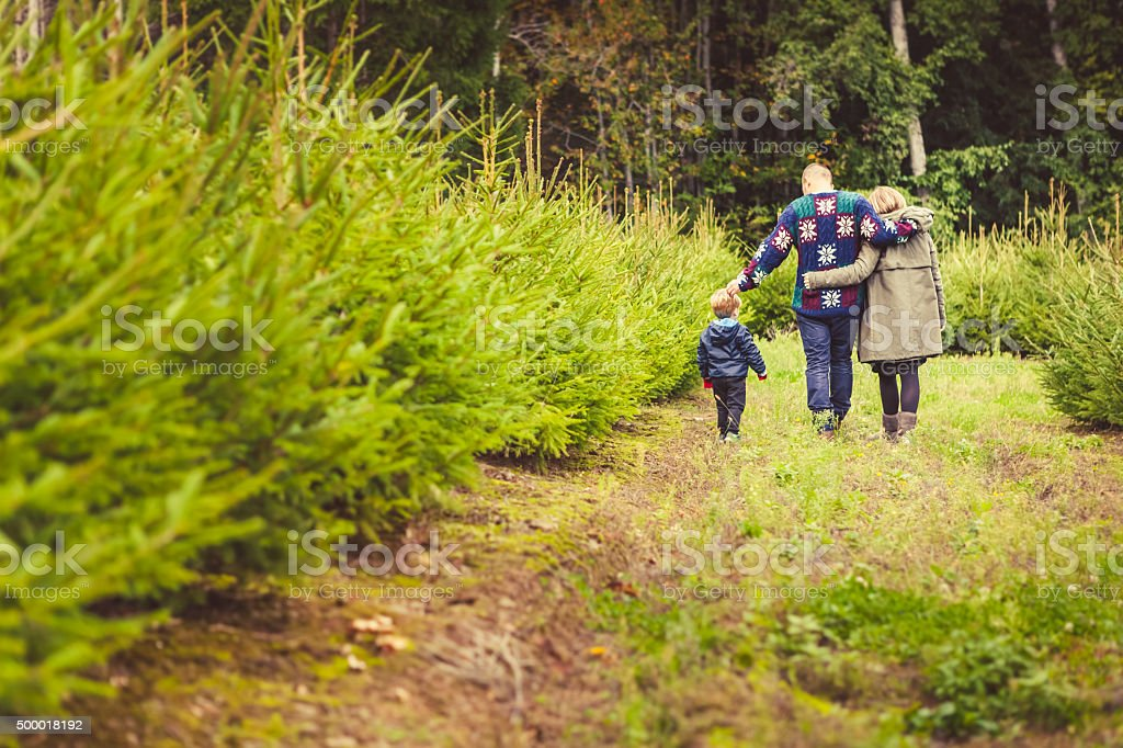 Happy Family with Child Choosing Christmas Tree at the Farm stock photo