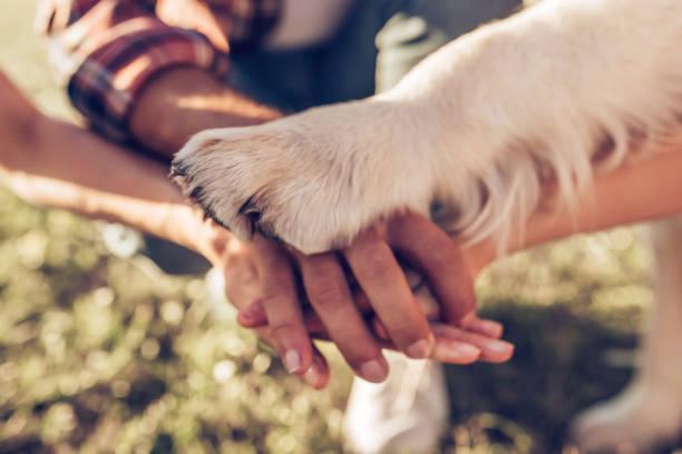 mutlu aile ile köpek - pati stok fotoğraflar ve resimler