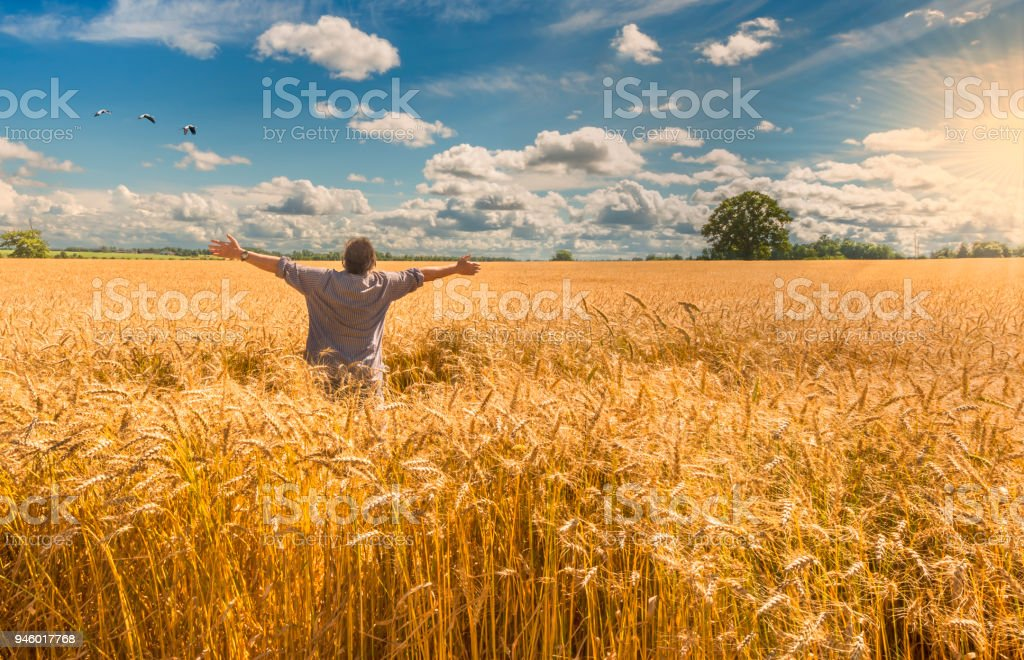 Happy farmer among field of wheat stock photo