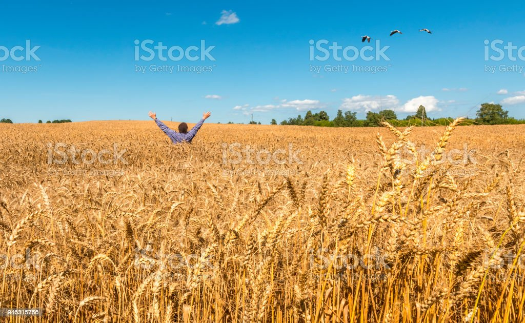 Happy farmer among ripe harvesting field of wheat stock photo