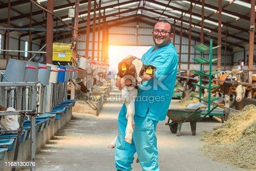 Happy farmer carrying newborn calf