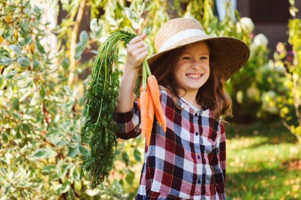 happy farmer child girl picking fresh home growth carrot harvest from own garden. Seasonal autumn and summer work. stock photo