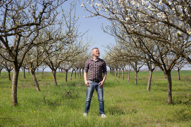 glückliche bauer in seinen blühenden pflaumenbaum obstgarten - pflaumen jeans stock-fotos und bilder