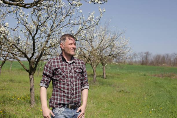 glücklich landwirt im baum schatten auf seinen blühenden pflaumenbaum obstgarten - pflaumen jeans stock-fotos und bilder