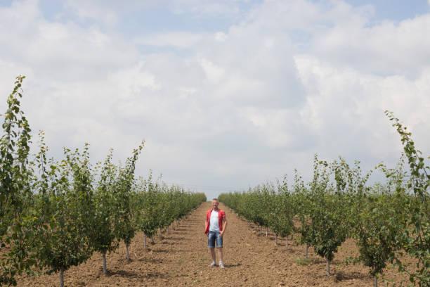 glückliche bauer stehend auf seinem großen, reichlich, pflaumenbaum obstgarten wachsen - pflaumen jeans stock-fotos und bilder