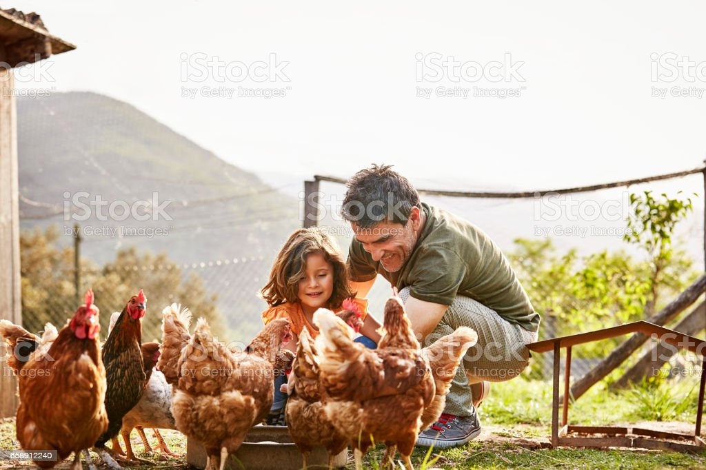 Happy father and daughter feeding hens at farm stock photo
